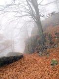 путь осени Стоковая Фотография