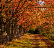 Путь осени Стоковое Фото