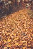 Путь осени Стоковое Изображение
