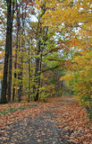 Путь осени Стоковые Фото