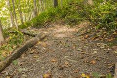 Путь осени Wildflowers Стоковые Изображения RF