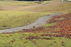 Путь падения с листьями стоковые изображения