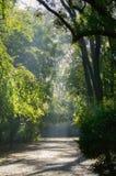 Путь парка в дне Sanny Стоковая Фотография