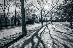 путь парка города Стоковая Фотография RF