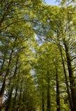 Путь парка между деревьями на весне Стоковое Изображение
