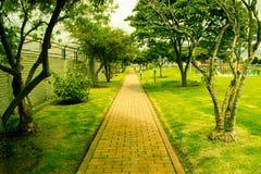 Путь парка на солнечный день стоковое фото rf