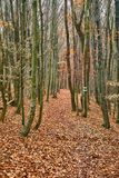 Путь парка осени Стоковые Изображения