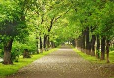 Путь парка стоковое изображение rf