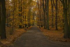 путь парка Стоковая Фотография