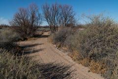 Путь парка Bosque долины Mesilla идя, Неш-Мексико стоковое изображение rf