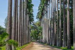 Путь пальмы - ботанический сад Рио-де-Жанейро, Бразилия Стоковое Фото
