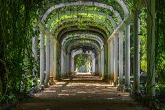 Путь пальмы - ботанический сад Рио-де-Жанейро, Бразилия Стоковые Фотографии RF