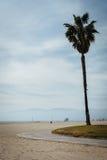 Путь пальмы и велосипеда на пляже, в пляже Венеции Стоковые Фотографии RF