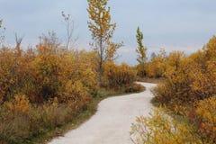 Путь пейзажа осени стоковые изображения