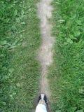 путь первого шага Стоковая Фотография RF