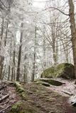Путь пересекает замороженный лес Стоковое Изображение RF