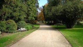 Путь песка выровнянный с деревьями стоковые фото