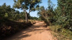 Путь песка через лес Стоковая Фотография RF