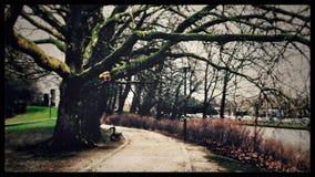 Путь под деревом стоковое фото