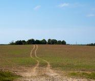 путь поля зеленый Стоковое Фото
