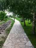 Путь под деревьями стоковые изображения rf