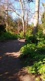 Путь полесья Стоковое Фото