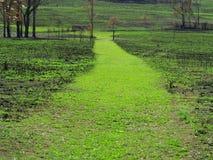 Путь поля пускает ростии зеленый цвет после лесных пожаров Стоковое Изображение RF