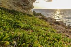 Путь предусматривал с вегетацией Средиземное море Стоковая Фотография