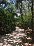 Путь природы Стоковые Изображения