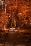 Путь прогулки деревянного моста через лес Стоковое фото RF