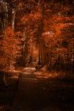Путь прогулки деревянного моста через лес Стоковые Изображения RF