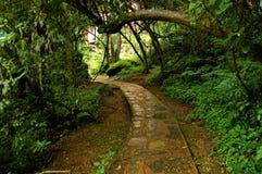 Путь прогулки к уединённый падению заводи Стоковое фото RF