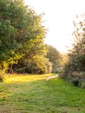 Путь прогулки травы лета через деревья не освещает яркий никакие людей Стоковые Изображения