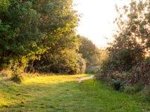 Путь прогулки травы лета через деревья не освещает яркий никакие людей Стоковое Изображение
