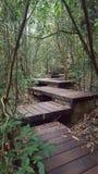 Путь прогулки шага деревянный стоковая фотография rf