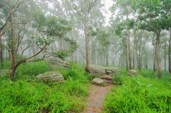 Путь прогулки закрытый с камнем в лесе Стоковые Изображения RF