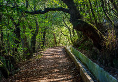 Путь прогулки Мадейры Levada сценарный Стоковое Изображение