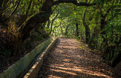 Путь прогулки Мадейры Levada сценарный Стоковая Фотография RF