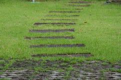 Путь прогулки на дерновине зеленой травы Стоковые Фотографии RF