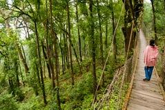 Путь прогулки сени Стоковое Фото