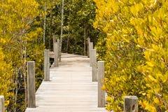путь прогулки среди леса мангровы осени Стоковое фото RF