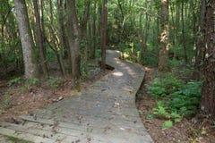 Путь променада через древесины Стоковые Фотографии RF