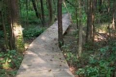 Путь променада через древесины стоковое фото