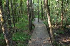 Путь променада через древесины Стоковое Изображение
