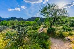 Путь пустыни Стоковые Фотографии RF