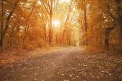 Путь пути в лесе осени Стоковое Фото