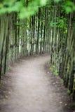 Путь пути прогулки грязи выровнялся с тонкими деревьями на обеих сторонах стоковые изображения