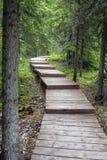 путь пущи деревянный Стоковое фото RF