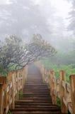 путь пущи деревянный Стоковая Фотография RF