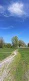 путь пущи к Стоковая Фотография RF